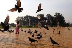 Flug der Tauben Lizenzfreie Stockfotografie