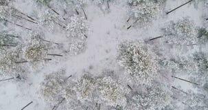 Flug direkt über Winterwald in 4K stock video footage