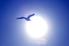 Flug einer Seemöwe Stockfoto