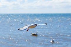Flug einer weißen Seemöwe über Meer. Hintergrund des blauen Himmels Lizenzfreie Stockfotos