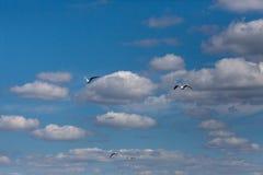 Flug von Seemöwen über dem Fluss Stockfoto