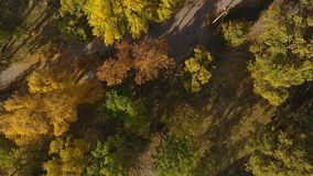 Flug zum Brummen in einem schönen Park stock footage