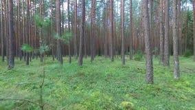 Flug zwischen Bäumen im Wald stock video footage