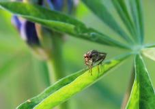 flugaögon Arkivfoton