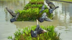 Fluga Fotografering för Bildbyråer