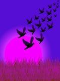 fluga för 02 fåglar Arkivbild