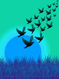 fluga för 03 fåglar Arkivfoto