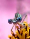fluga för 3 drake Royaltyfria Bilder