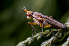 fluga i dess naturliga miljö Arkivbilder