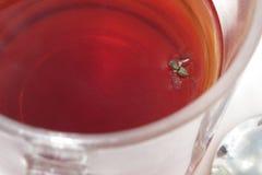 Fluga i drink Fotografering för Bildbyråer