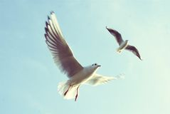 Fluga i himlen av floden Royaltyfria Bilder