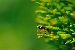 fluga lagd benen på ryggen red arkivfoton