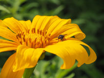 Fluga och blomma Fotografering för Bildbyråer