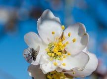 Fluga och blomma - blom Royaltyfri Bild