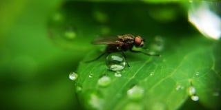 Fluga och droppar arkivfoton