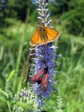 Fluga och fjäril på växten Arkivfoto
