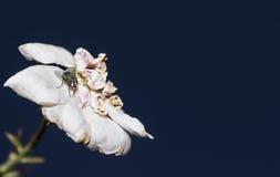 Fluga på blomman Arkivfoto