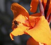 Fluga på en blomma Royaltyfri Foto
