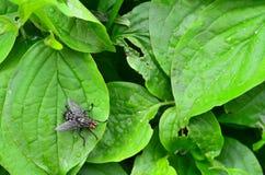 Fluga på en leaf fotografering för bildbyråer