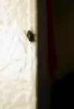 Fluga på en vägg Royaltyfri Bild