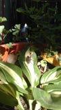 Fluga på en växt Royaltyfri Foto