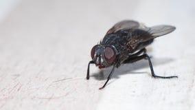 Fluga på golvet Arkivfoton