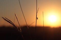 Fluga på gräs med solen arkivfoto