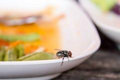 Fluga på maträtten Fotografering för Bildbyråer