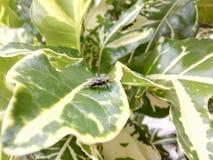 Fluga på planthouse Fotografering för Bildbyråer