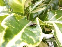 Fluga på planthouse Arkivfoto