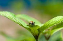 Fluga på tjänstledigheterna fotografering för bildbyråer