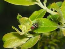 Fluga på växt Fotografering för Bildbyråer