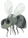 Fluga på vit bakgrund vektor illustrationer