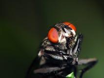 fluga som är klar till Arkivfoto