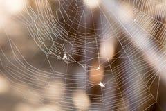 Fluga som fångas i en spindelrengöringsduk Arkivbilder