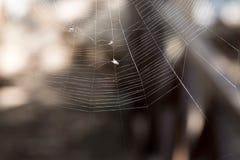 Fluga som fångas i en spindelrengöringsduk Arkivfoton