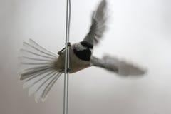 fluga som förbereds till Royaltyfri Fotografi