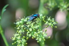 Fluga som fokuseras på gräsplan Arkivbild