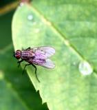Fluga som tätt fotograferas Royaltyfria Foton