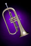 Flugalhorn or Flugelhorn  Isolated on Purple Stock Photo