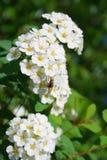Flugan på blomman Royaltyfri Foto