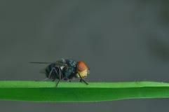Flugan perching på den gröna leafen arkivfoton