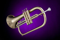 Flugelhorn Trumpet Isolated On Purple. A gold brass trumpet flugelhorn wind instrument isolated against a spotlight purple background Stock Photos