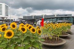 Flughafenquadrat mit Sonnenblumen und Reisenden an t Stockbilder