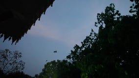 Flughund leben im Tempel bei Thailand stock video footage