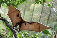 Flughunde am Singapur-Zoo stockfotos