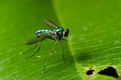 flugor Arkivbilder