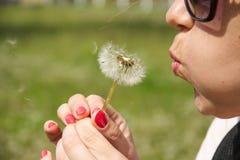 Flugor för en maskros Royaltyfri Fotografi