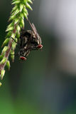 flugor två arkivfoto
