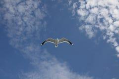 flugwesen stockbild
